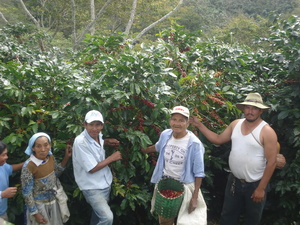 Featured Coffee of the Month: Honduran COMSA