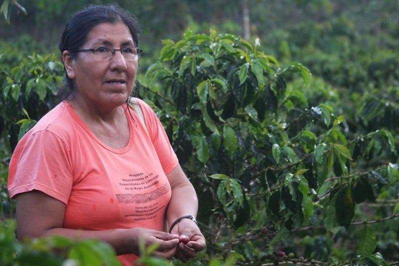 Pangoa – In The Field