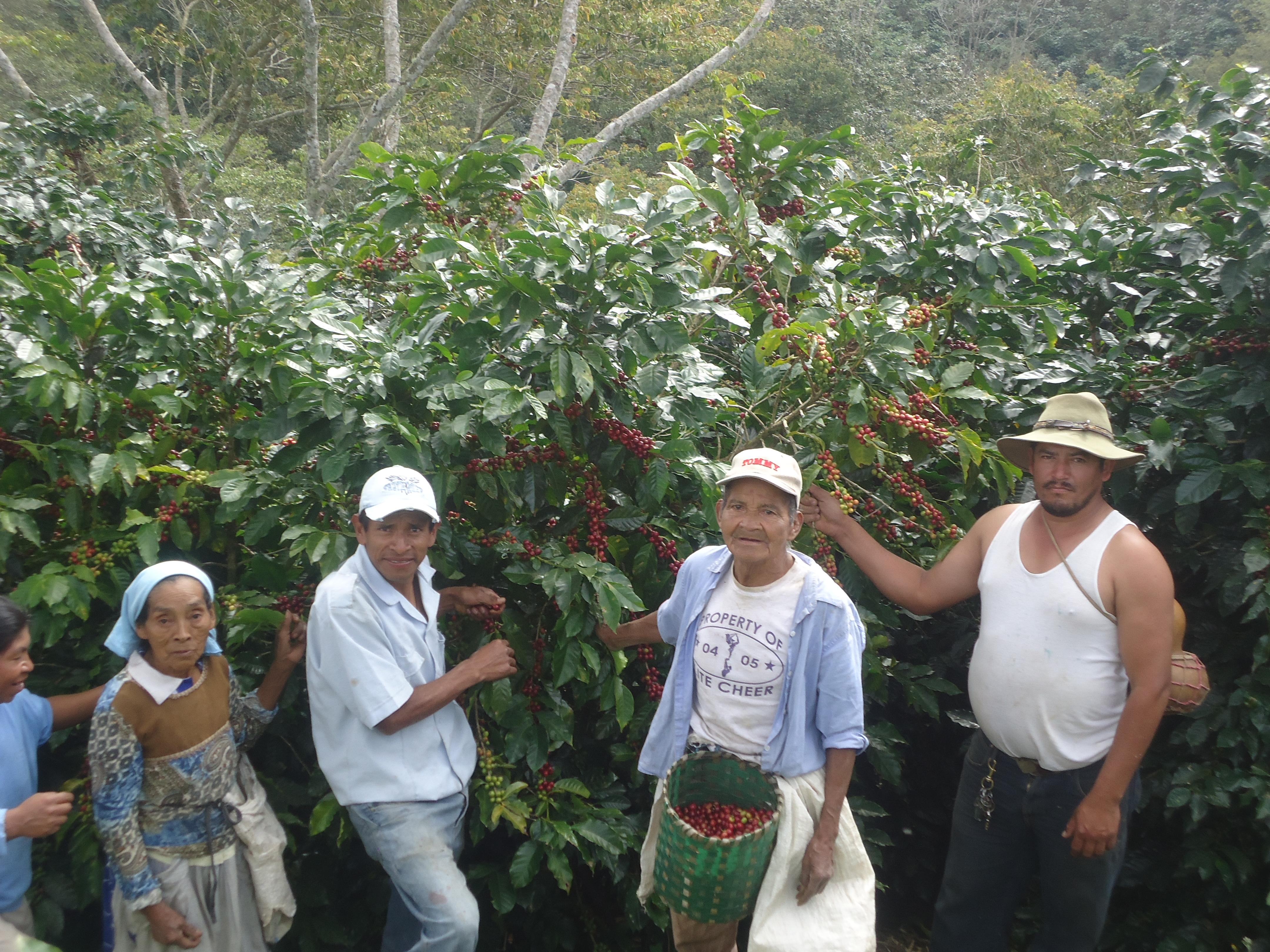 COMSA_farmers